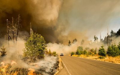 How To Protect Your Investment Portfolio From Wildfires
